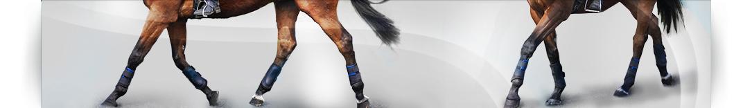 sub-banner_horse